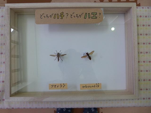 ハチとハエ