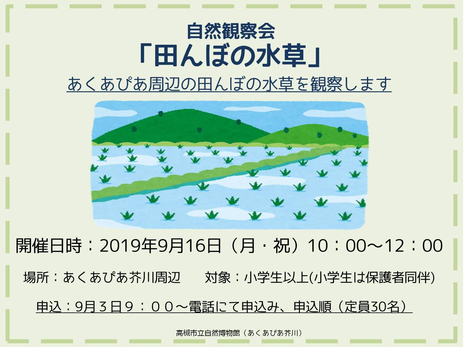 田んぼの水草HP用画像.jpg