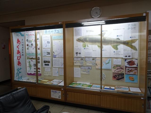 出張展示「芥川のアユ」