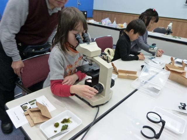 顕微鏡で見る