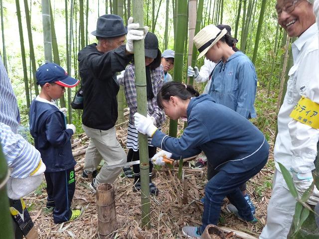竹林で伐採