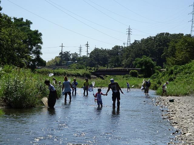 芥川に入ってトンボを捕まえる参加者たち