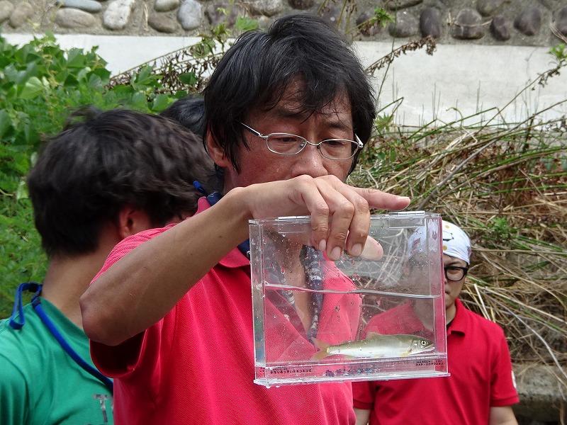 採れた魚の解説