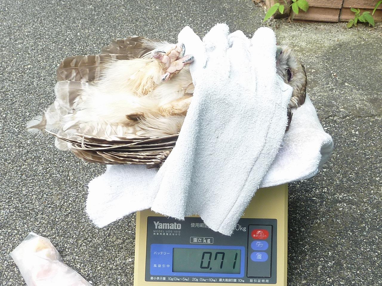 翔三朗の体重測定