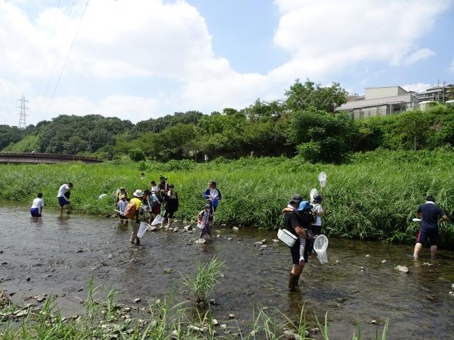 川でトンボの採集