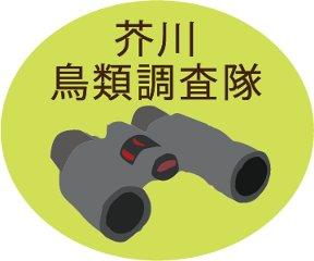 芥川鳥類調査隊
