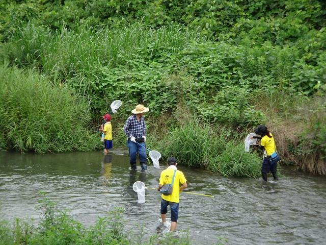 川に入ってトンボを探す参加者たち