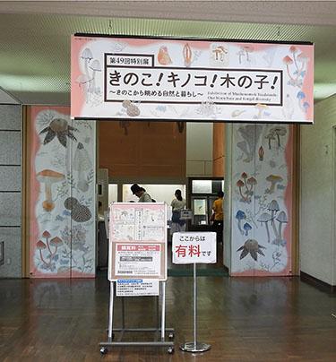 きのこ展入口.jpg