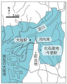 図2:化石産地の地図。水色で示されているのは完新世に平野に入り込んでいた海。(本研究で発表した論文Tanaka and Taruno, 2017より改変).jpg
