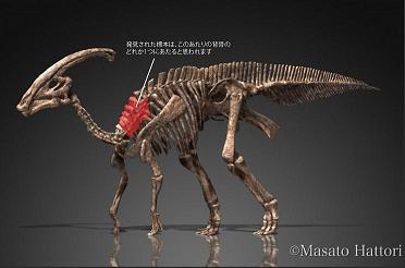 図2_ハドロサウルス類(パラサウロロフス)の骨格.jpg
