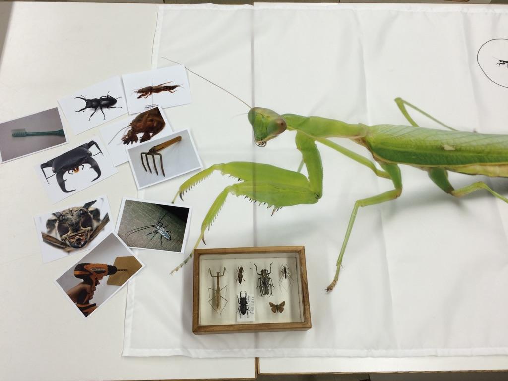 虫の体キット.jpg