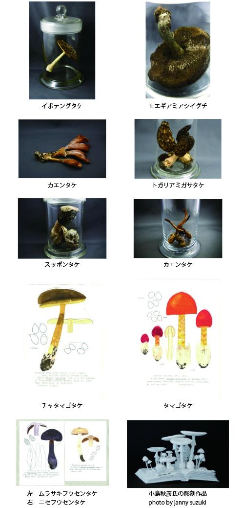 kinoko_tenji.jpg