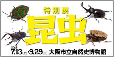 konchu_banner.jpg
