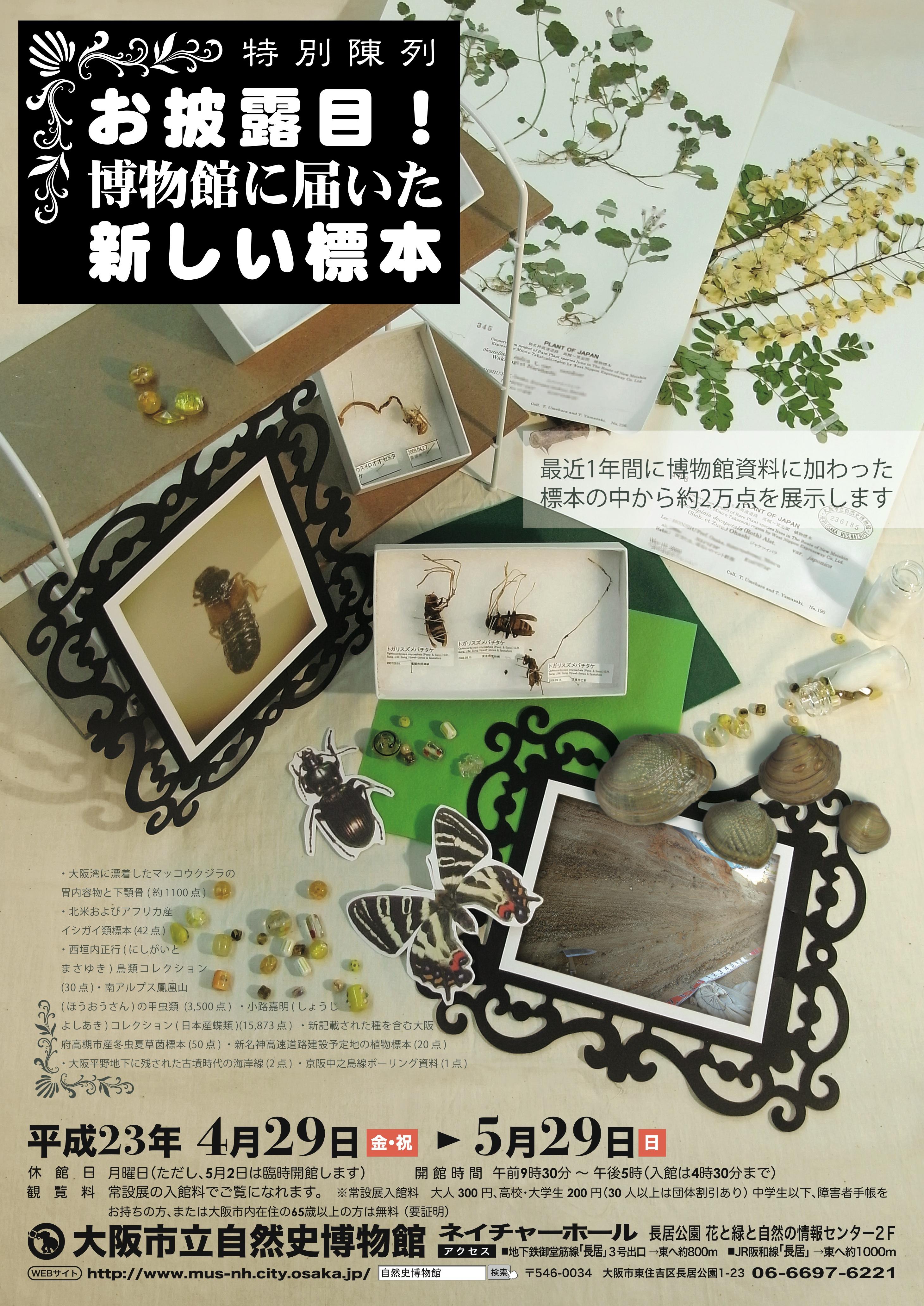 shinsyu2011.jpg